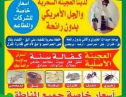 شركة المجد لمكافحة الحشرات - محافظة حولي - مكافحة الحشرات - مقاولات وحرف -  خدمات - اعلانات الكويت