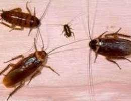 شركة الاحسان لمكافحة الحشرات والقوارض